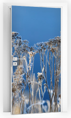 Naklejka na drzwi - winter background landscape of grass with rime