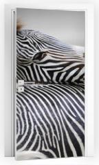 Naklejka na drzwi - Zebra