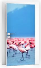 Naklejka na drzwi - African flamingos