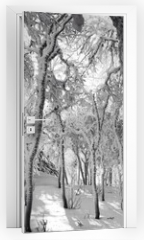 Naklejka na drzwi - Frozen Forest