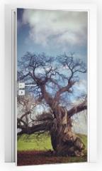 Naklejka na drzwi - skeletal tree without leaves in autumn