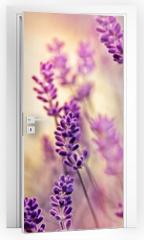 Naklejka na drzwi - Soft focus on beautiful lavender and sun rays - sunbeams