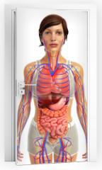 Naklejka na drzwi - 3d rendered illustration of