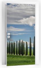 Naklejka na drzwi - Avenue of cypresses