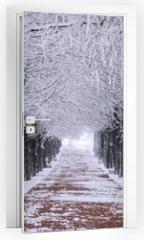 Naklejka na drzwi - Row of trees in Winter with falling snow.