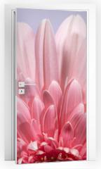 Naklejka na drzwi - Gerbera flower blossom.