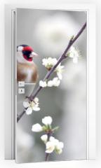 Naklejka na drzwi - Goldfinch, Carduelis carduelis