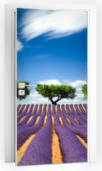 Naklejka na drzwi - Lavande Provence France / lavender field in Provence, France