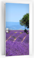 Naklejka na drzwi - Lavender field. The plateau of Valensole in Provence