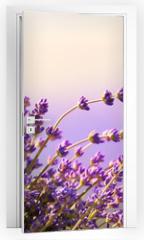 Naklejka na drzwi - Lavender flowers bloom summer time