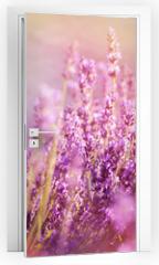 Naklejka na drzwi - Lavender flowers lit by sun rays (sunbeams)