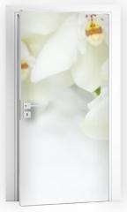 Naklejka na drzwi - Orchid Flowers