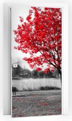 Naklejka na drzwi - Red Tree Over Park Bench