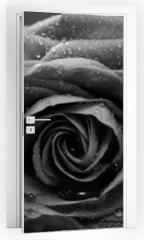 Naklejka na drzwi - Rose, Nahaufnahme, schwarzweiss Umwandlung