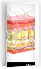 Naklejka na drzwi - Skin Anatomy