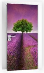 Naklejka na drzwi - Stunning lavender field landscape Summer sunset with single tree