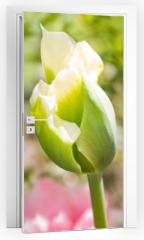 Naklejka na drzwi - Tulips