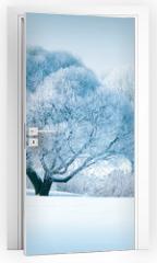 Naklejka na drzwi - Winter trees