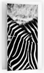 Naklejka na drzwi - Zebras in Kruger National Park, South Africa