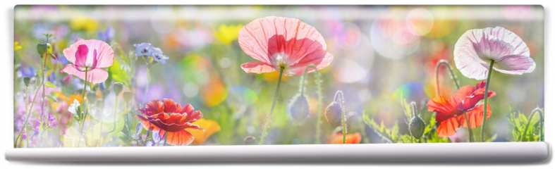 Fototapeta - summer meadow with red poppies