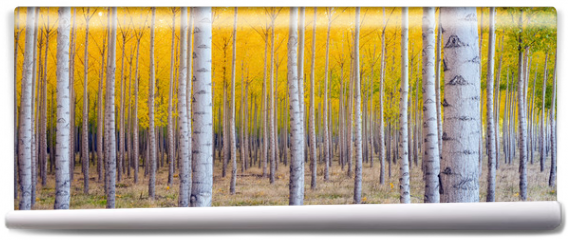 Fototapeta - Beautiful Trees Leaves Changing Autumn