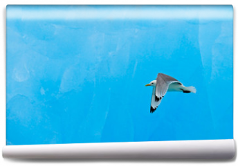 Fototapeta - Black-legged Kittiwake, Rissa tridactyla, with blue ice glacier, iceberg, in background, Svalbard, Norway