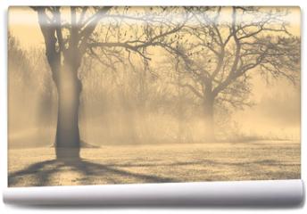 Fototapeta - Bäume