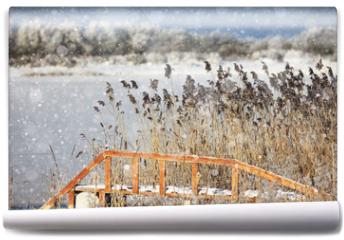 Fototapeta - winter landscape in the background field
