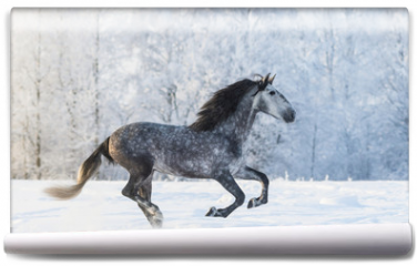 Fototapeta - Purebred horse galloping across a winter snowy meadow