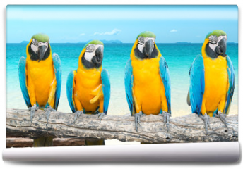 Fototapeta - Blue and Gold Macaw on tropical beautiful beach and sea