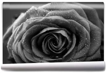 Fototapeta - Rose, Nahaufnahme, schwarzweiss Umwandlung