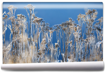 Fototapeta - winter background landscape of grass with rime