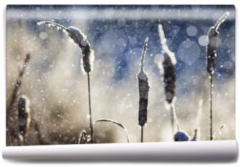 Fototapeta - texture of the snow