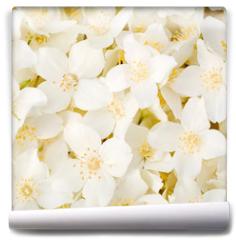 Fototapeta - Jasmine flower