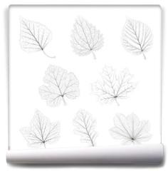 Fototapeta - Set of vector isolated monochrome single leaves