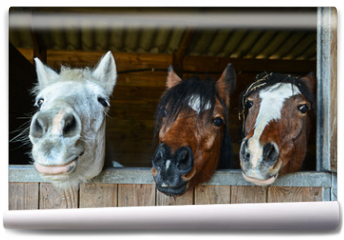 Fototapeta - Funny horses in their stable