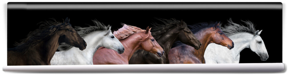 Fototapeta - Six horses portraits isolated on a black background
