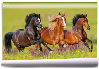 Fototapeta - Horses run gallop in flower meadow