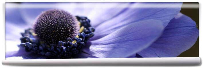 Fototapeta - fleur bleue