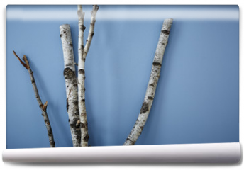 Fototapeta - birch tree on blue wall modern interior design