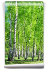 Fototapeta - Birch grove, bright green leaves in summer
