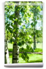 Fototapeta - Young birch branches in the sunlight . Spring green background. Juicy greens