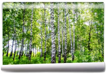 Fototapeta - birch grove