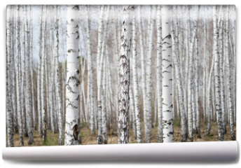 Fototapeta - birch forest