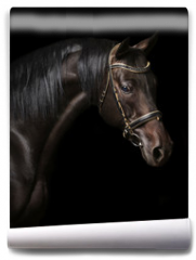 Fototapeta - Portrait of a bay stallion