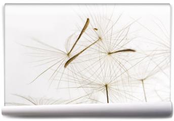 Fototapeta - dandelion fluff