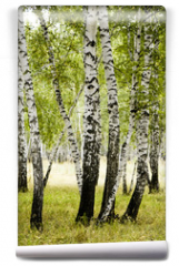 Fototapeta - birch forest summer landscape