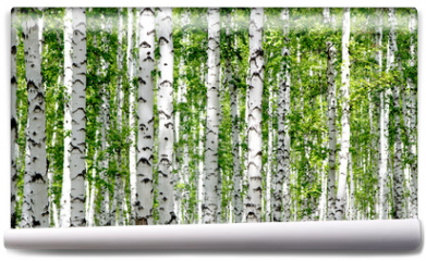 Fototapeta - White birch trees in the forest in summer