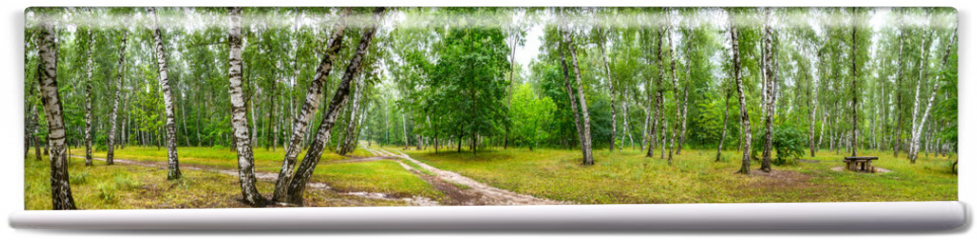 Fototapeta - Birch grove with a road and bench on sunny summer day, huge panorama