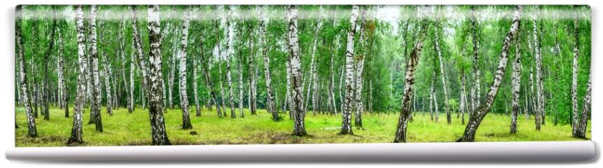 Fototapeta - Birch grove on a sunny summer day, landscape banner, huge panorama